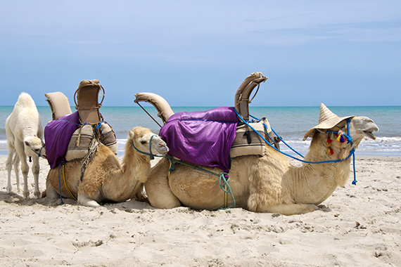 Les plages authentiques de Djerba